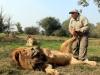 lion-tickle-paw_1652716i_0
