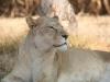 www-gauteng-net-img_9046_-_copy_2-620x0_0